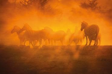 8 Tage Privatsafari im Kafue Nationalpark