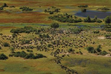 7 Tage Flugsafari - von Maun ins Okavango Delta und in den Moremi