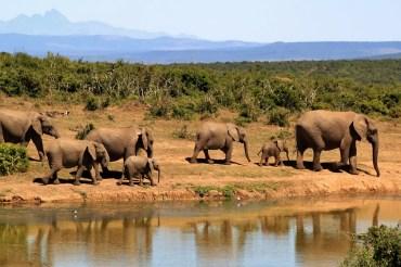 12 Tage Kleingruppensafari durch Tansania