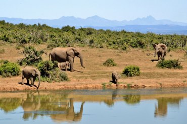 5 Tage Big Five Safari 5 im Aquila Private Game Reserve