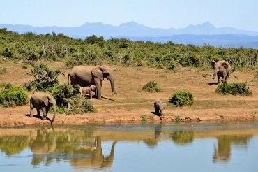 5 Tage Big Five Safari 5 im Aquila Private Game Reserve