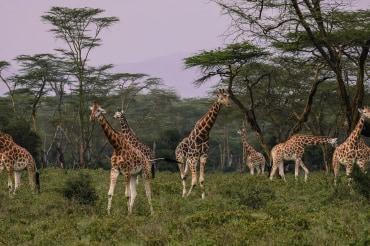 12 Tage privat geführte Safari durch Tansania