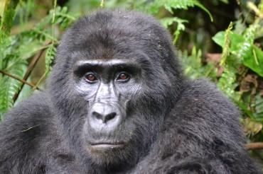 Uganda - die Perle Afrikas & RUANDA - das Land der tausend Hügel