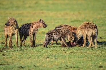 11 Tage Strandurlaub und Safari