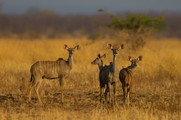 9 Tage Privatsafari Sambia