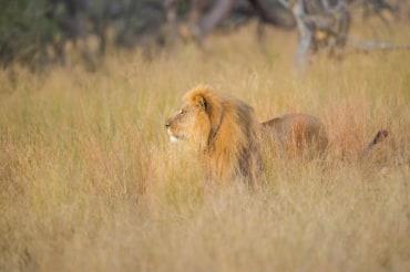 14 Tage Mietwagenreise zu den Highlights in Simbabwe