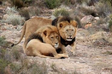 17 Tage Kleingruppen Tansania Reise - Vom Kilimanjaro zum Tanganyika-See