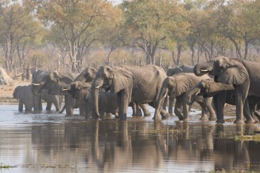 17 Tage Camping Gruppenreise mit 12 Teilnehmern durch Botswana