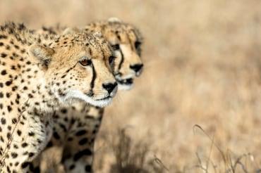 """14 Tage Gruppenreise mit max. 12 Personen """"Wandern in Südafrikas Nordosten"""""""