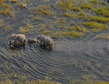 9 Tage Gruppenreise mit 11 Teilnehmern rund um das Okavango Delta