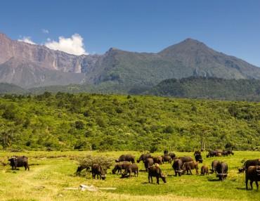 21 Tage Selbstfahrerreise Tansania mit anschließendem Sansibar Badeurlaub