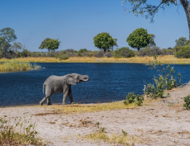 5 Tage Mobile Zelt Safari in Botswana