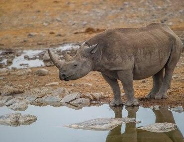 14 Tage Namibia Selbstfahrerreise - Gondwana Highlight Tour