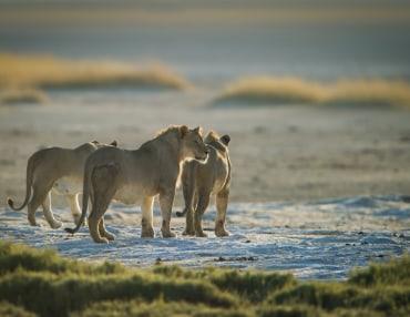 12 Tage Kleingruppenreise mit 7 Personen zu den Highlights in Namibia