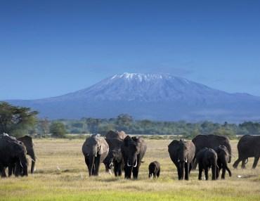 11 Tage Kleingruppen Wandersafari mit Komfort in Tansania