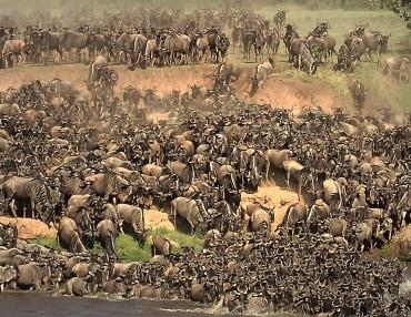 7 Tage Kenia Komfort Safari