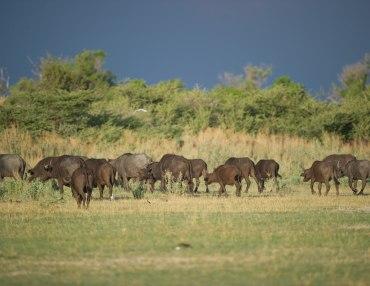 20 Tage Camping - Lodge Mietwagenreise in die schönsten Nationalparks Botswanas