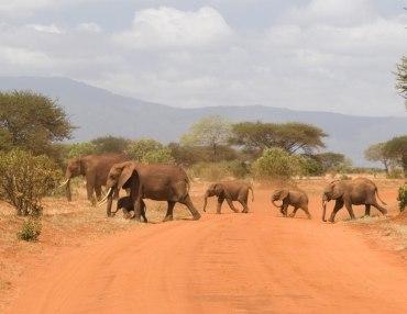 5 Tage Kenia Familiensafari