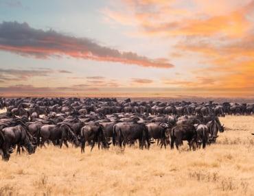 12 Tage Kleingruppen Safarireise durch Kenia und Tansania