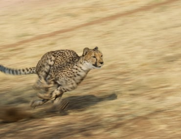 15 Tage Gruppenreise mit max. 12 Personen von den Victoria Falls bis nach Windhoek
