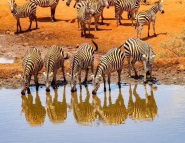 15 Tage Kleingruppenreise in die Safariparadiese in Tansania und Kenia