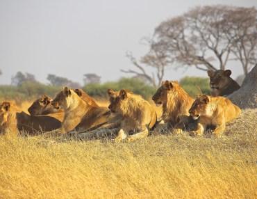 10 Tage Kleingruppenreise durch den Süden Tansanias
