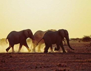 21 Tage Mietwagenreise durch Namibia