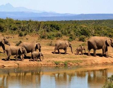 Privat geführte Safari durch Tansania
