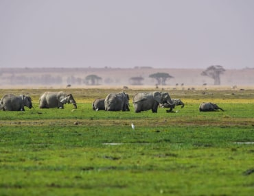 Privat geführte Kenia Safari in die Nationalparks abseits der Touristenrouten