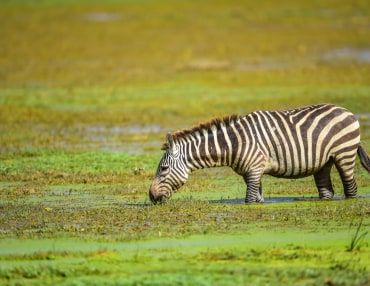 Das Hochland Kenias und Samburu