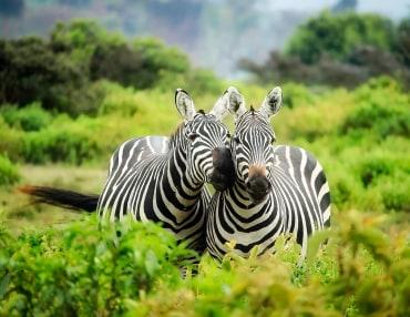 15 Tage Safariparadiese in Tansania & Kenia