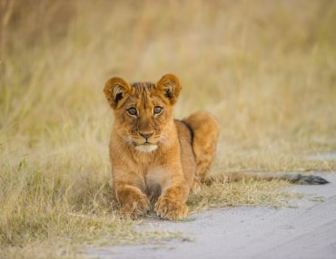 12 Tage Simbabwe Mietwagenreise zu den schönsten Nationalparks