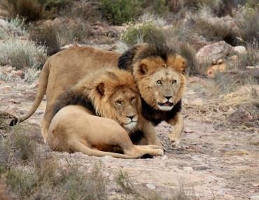 16 Tage Kleingruppen Tansania Reise - Vom Kilimanjaro zum Tanganyika-See