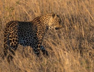 17 Tage Gruppenreise mit max. 12 Personen von Johannesburg bis Kapstadt
