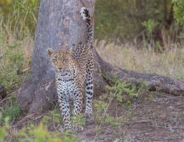 16 Tage Gruppenreise mit max. 12 Personen durch Südafrika, Simbabwe und Botswana