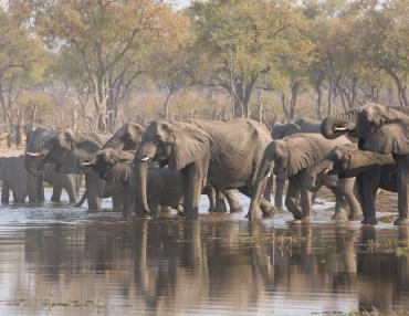 17 Tage Camping Gruppenreise mit 12 Teilnehmern durch Botswana
