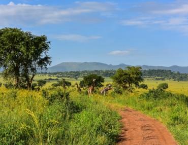 14 Tage privat geführte Uganda Reise