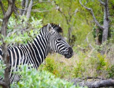 19 Tage Südafrika Highlights Kleingruppenreise