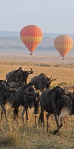 Beste Safari der Welt