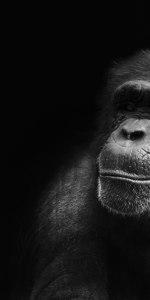 Schimpansen Meine Welt Reisen