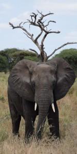 elephant-amobseli-meinewelt-reisen