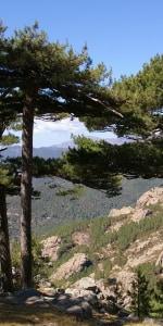 Tag 6 nature-Schatten-korsika-meinewelt-reisen