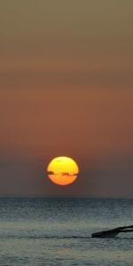 dhow-sunset-cruise