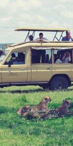 Pirschfaht Masai Mara