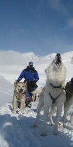 husky-wildnis-lappland-schweden.jpg