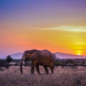 11 Tage Spezial Fotoreise mit Harald Braun in den Amboseli NP, Mount Suswa und Masai Mara