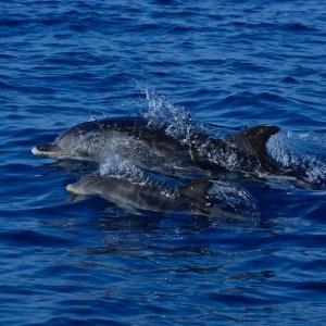 8 Tage Azoren Naturreise- Wal- und Delfinsafari
