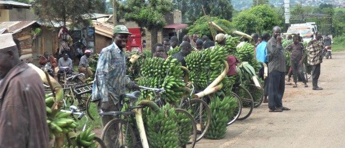 1-bananataxi-meineweltreisen1010451-bearbeitet.jpg