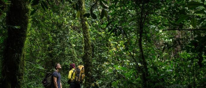 Regenwald-ruwenzori