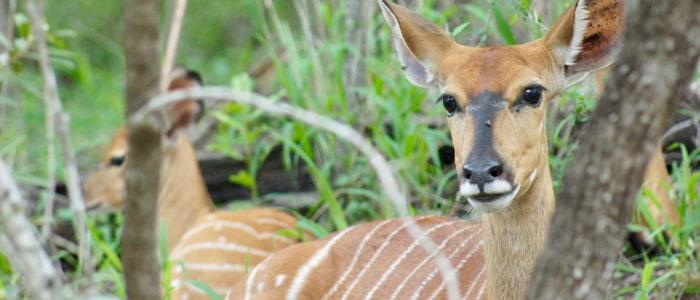 gazelle meinewelt-reisen